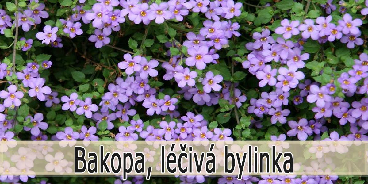 Bakopa - Bylina jako lék